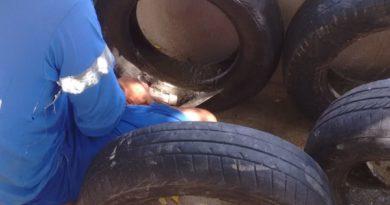 Caernianos reciclam pneus para substituir cones